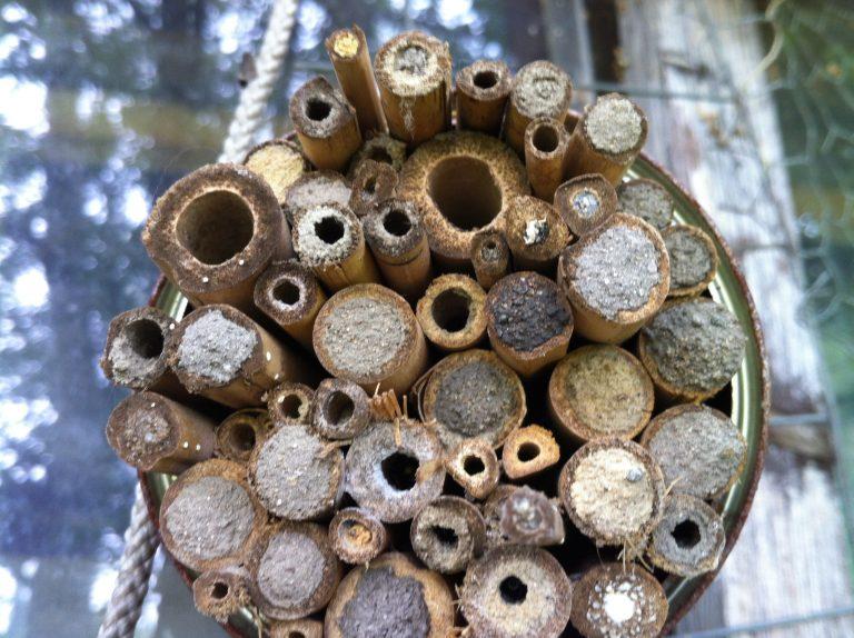Nisthilfe für oberirdisch nistende Wildbienenarten