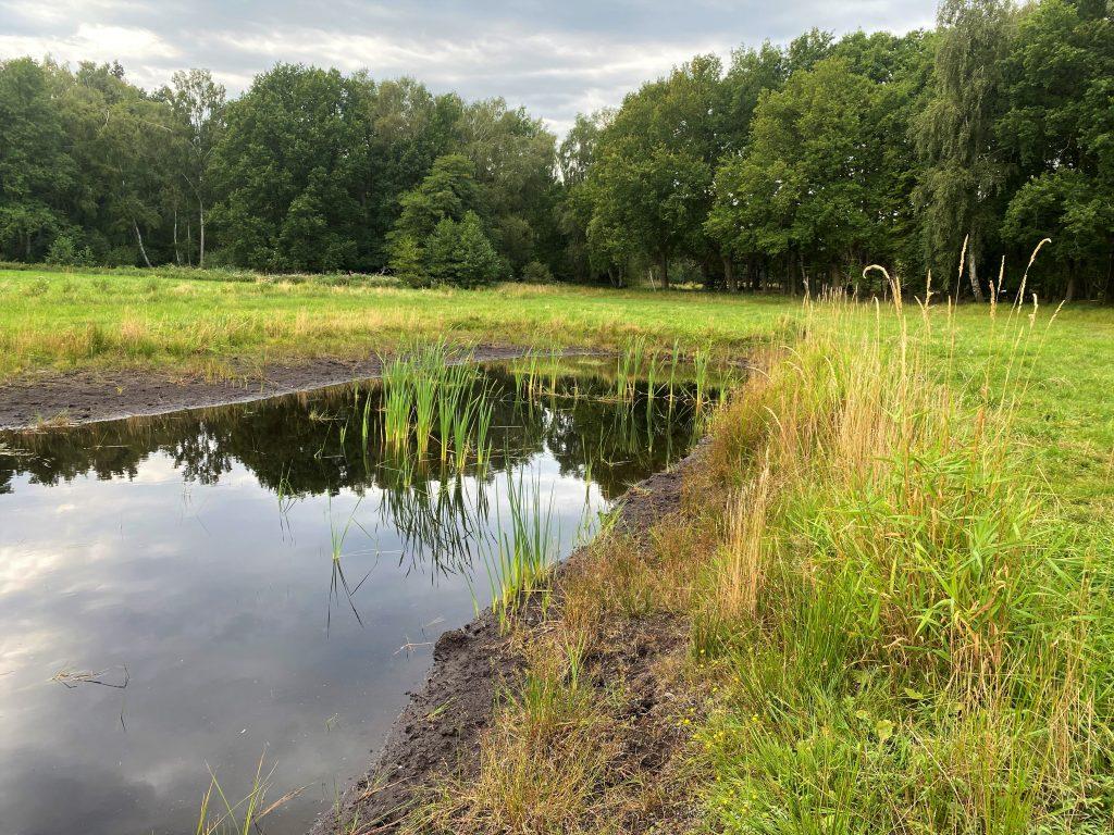 Ein Kleingewässer mit typischer Ufervegetation